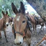 Foto de Molokai Mule Ride