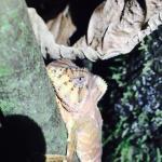 Photo de Arenal Oasis Eco Lodge & Wildlife Refuge