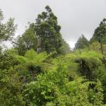 Waitakere Ranges Foto