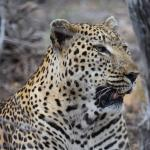 Naledi Bushcamp and Enkoveni Camp-bild