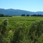 Explore Marlborough Wine Tours Photo