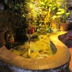 The inside fish pond.