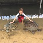 Turtle Island Tour Foto