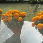 Marigold blossoms at the front entrance!