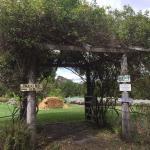 Thurlby Herb Farm Cafe Image