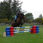 one of our horses doing a jump lesson