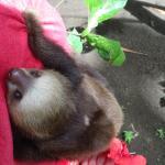 Foto de Tree of Life Wildlife Rescue Center and Botanical Gardens