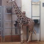 Krakow Zoo (Ogrod Zoologiczny) Foto