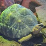 Photo de Toronto Zoo