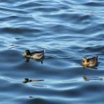 Foto de Lake Mendota