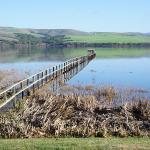 Hifh Tide on tomales bay