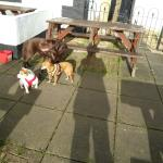 lunch at this dog friendly pub 1st Feb.  Friendly staff and lovely setting beside the viaduct an
