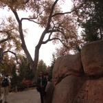 Photo of ABQ BioPark Zoo
