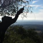 Palomar Observatory Foto