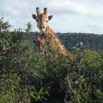 Sibuya Game Reserve - these are photos we took while on our game drives with our guide Andrew at