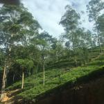 Ceylon Tea Trails Foto
