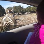 Photo de Natural Bridge Wildlife Ranch