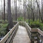 Six Mile Cypress Slough Preserve Foto