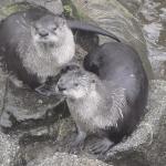 Buckfast Butterfly Farm and Dartmoor Otter Sanctuary Foto