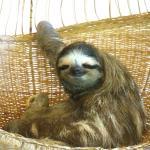 Photo de Aviarios del Caribe Sloth Sanctuary