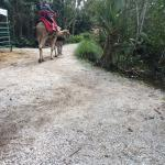 Naples Zoo at Caribbean Gardens Photo