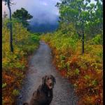 Butze Rapids Park and Trail Foto