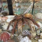 Port Stephens Shell Museum