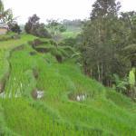 Photo de Jatiluwih Green Land