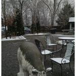 A dusting of snow at The Pineville