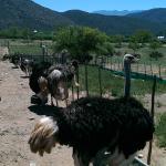 Montana Guest Farm-bild