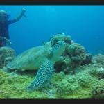 Divers'Ocean Foto