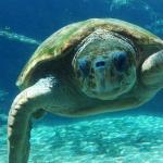 Photo de uShaka Marine World