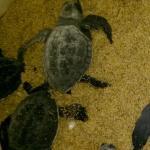 Chennai Turtle Walk