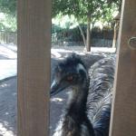 Foto de Palmitos Park MASPALOMAS