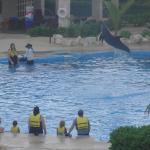 Vue de notre chambre sur la piscine des dauphins en actions