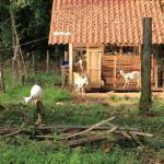 Foto de Cabinas los Laureles