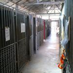Lanta Animal Welfare Foto