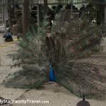 Samphran Peacock Park