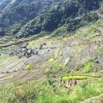 Foto de Batad Rice Terraces