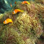 Photo de Velidhu Island Resort
