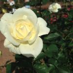 Harry P. Leu Gardens Foto