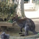 Photo of Lisbon Zoo (Jardim Zoologico de Lisboa)