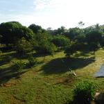 Looking out over the fruit trees and grounds