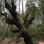 Huitepec Ecological Reserve