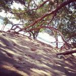 Los árboles de mangle son un lugar perfecto para descansar mientras estás frente al mar.