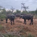 Foto de Kambaku Safari Lodge