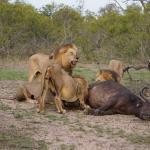 Idube Private Game Reserve Lodge Foto