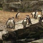 Foto de Chester Zoo