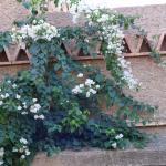fleurs sur la riad