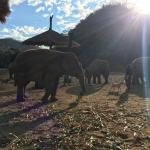Photo de Elephant Nature Park - Day Tours